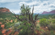 A view of Sedona from Bell Rock Hiking Trail