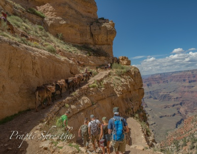 Shared the narrow trail with mules and other humans